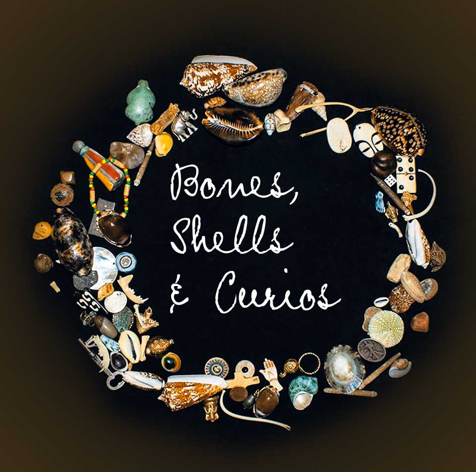 bones-shells-and-curios-brown
