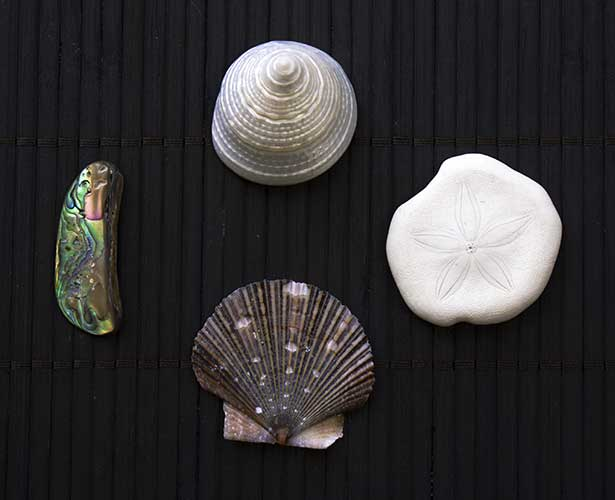 Shells - check to make sure they are sturdy, especially around the edges.