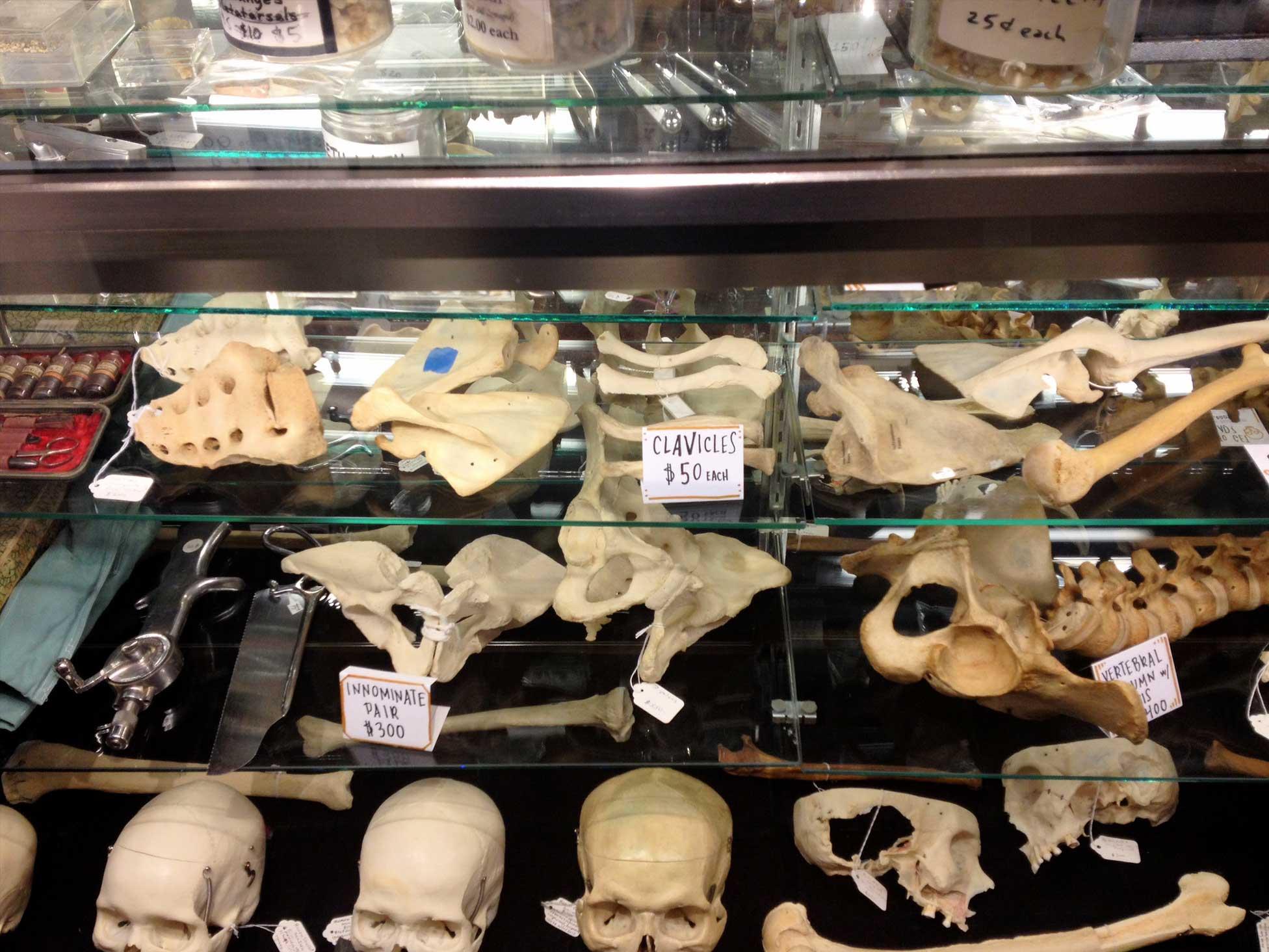 Bone Room