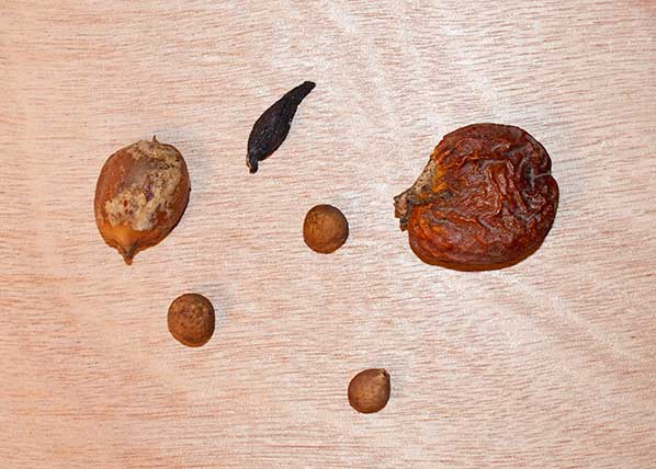 Seeds, cones and twigs.