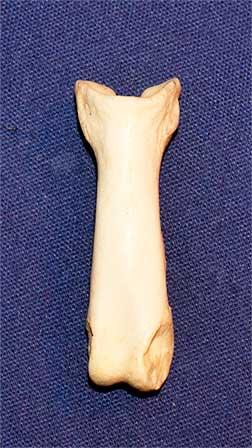 Lion bone