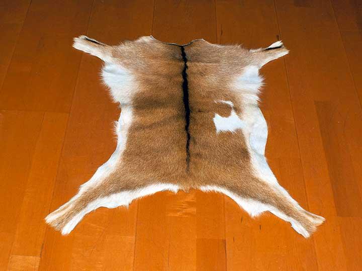 Goat skin for bone reading