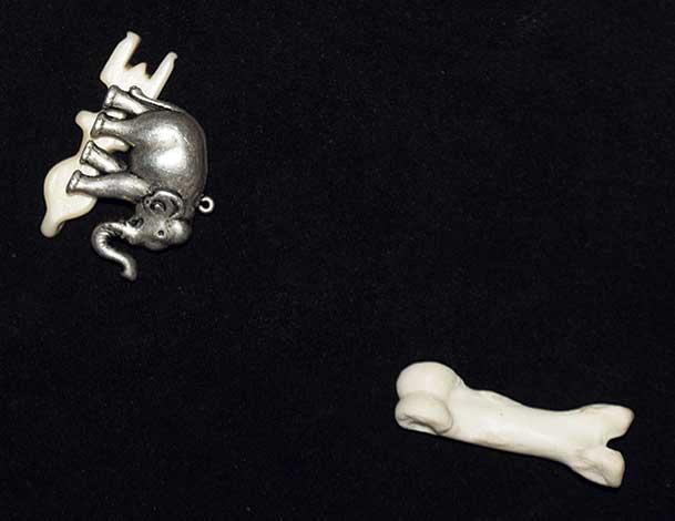 Querent, elephant and lion bone