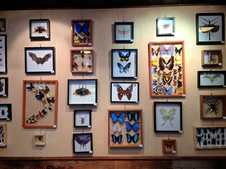 Butterflies and insects.