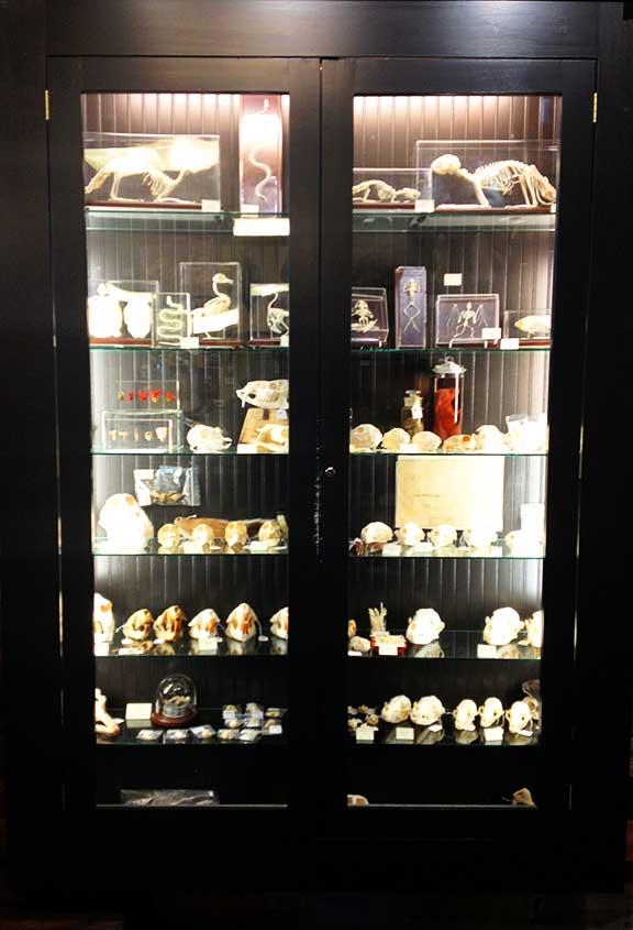 Skulls, animal body parts and small bones.