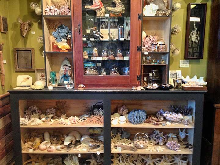 Seashells, starfish and other small oddities.