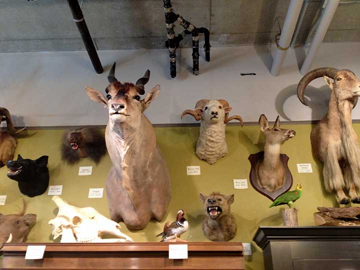 More taxidermy.