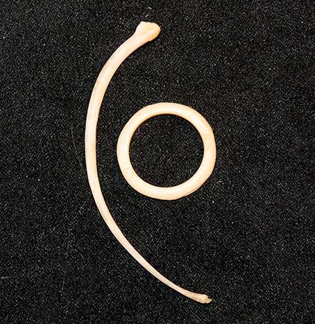 Rib and ring