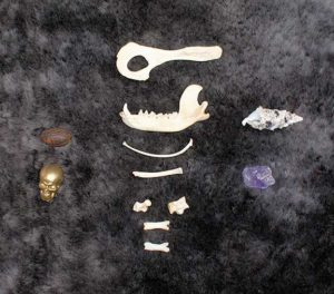 Bone Divination Starter Set by Mytho Menagerie